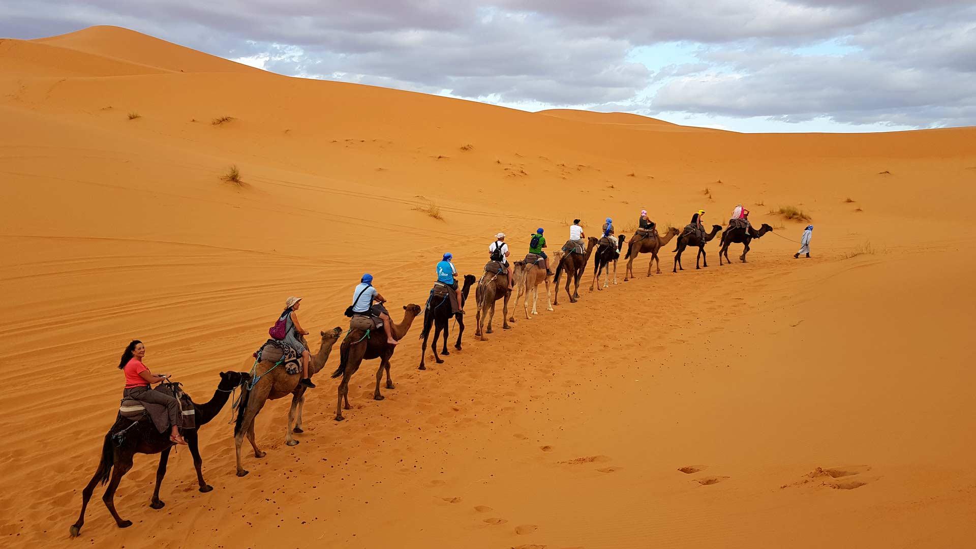 Marruecos. Dromedarios por el desierto del Sahara.