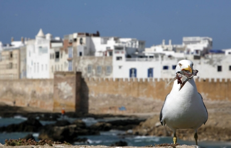 Essaouira, Marruecos.